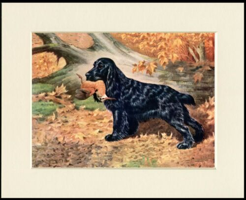 COCKER SPANIEL DOG AT WORK GREAT DOG ART PRINT MOUNTED READY TO FRAME