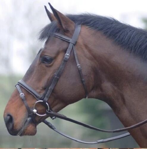 Equisport Leather Padded Bridle With FREE Reins Black or Brown  All Sizes