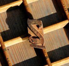Letter Z Rare Wood Type Letterpress Printing Block Woodtype Font Antique Print