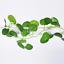 New-Artificial-Ivy-Fake-Foliage-Leaf-Flowers-Plants-Garland-Garden-Decoration-2M thumbnail 12