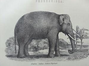 ANTIQUE-PRINT-DATED-C1870-039-S-PROBOSCIDEA-INDIAN-ELEPHANT-ENGRAVING-ANIMALS-ART
