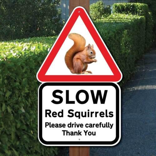 écureuil panneau routier animal signal de sécurité wildlife warning sign Écureuil roux signe