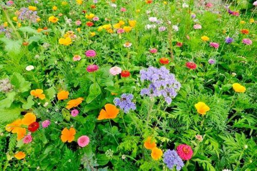 1 OZ=15,000+DEER RESISTANT WILDFLOWER MIX 15 Different Flower Seeds Butterflies