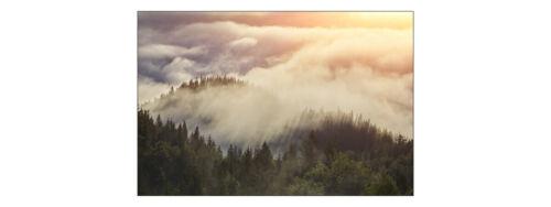 Fabelhafte VLIES FOTOTAPETE XXL Natur Sonnenuntergang Nebel WALD 8277 Wohnzimmer
