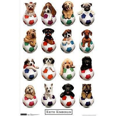 KEITH KIMBERLIN PUPPIES IN HATS POSTER 22X34 NEW FAST FREE SHIPPING