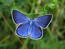 Ansichtskarte: Bläuling auf der Wiese - sehr schöner Schmetterling
