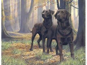 Nigel-Hemming-THE-BEECH-BOYS-Chocolate-Labradors-Labs