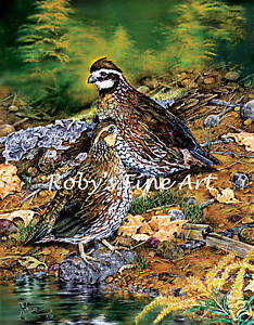 Bobwhite-Quail-Art-Print-034-Afternoon-Break-034-5x7-Giclee-Image-by-Artist-Roby-Baer