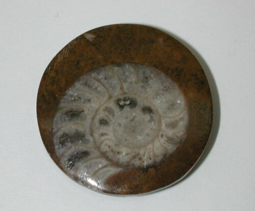 Ammonite Button 1.25 inches