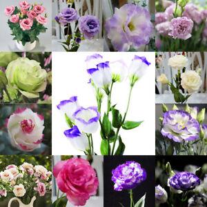 Eg 50pcs Garten Balkon Pflanze Eustoma Blumen Lisianthus Samen