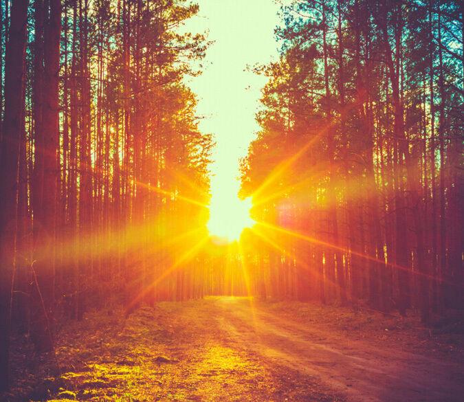 3D Wald, strahlende Sonne  Fototapeten Wandbild Fototapete BildTapete Familie DE