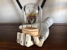 Cabinet de curiosités Oddities Globe insecte mante Creobroter gemmatus!!