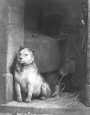 Tough Beaten Old English Bulldog Mongrel,1849 Edwin Landseer Art Print Engraving