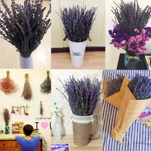 4-Bunch-Lavender-Natural-Dried-Flower-Best-Gift-Plant-Grass-Decor-New