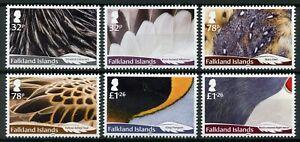 Falkland-Islands-2019-MNH-Feathers-6v-Set-Ducks-Owls-Penguins-Birds-Stamps