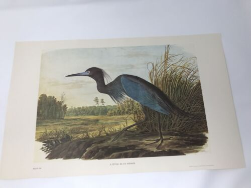 John James Audubon Folio Plate 362 Little Blue Heron Limited 750