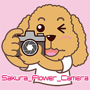 Sakura_Flower_Camera