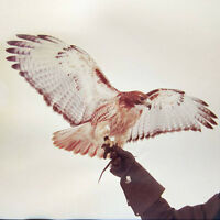 Jm Airis - Wild Birds [new Vinyl] on Sale