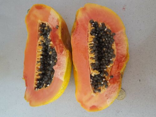 Papaya Carica Papaya Fruit Giant Delicious 200 Seeds Fresh
