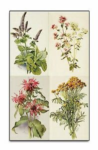 Details about OLD HERB BOOKS on DVD - HERBAL MEDICINE - RARE PLANT REMEDIES  MEDICAL BOTANY 274