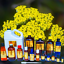 3ml-Essential-Oils-Many-Different-Oils-To-Choose-From-Buy-3-Get-1-Free thumbnail 101