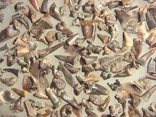 Permian VIAL of reptile amphibian shark tooth teeth Eryops Dimetrodon fossils