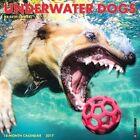 Underwater Dogs 2017 Calendar Willow Creek Press Corporate Author