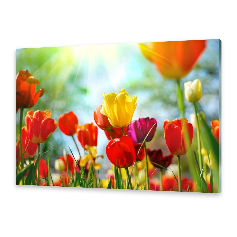Acrylglasbilder Wandbild aus Plexiglas® Bild Blaumen Tulpen