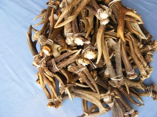 """10 Pairs 20 tines of Roe Deer Antlers 4/"""" to 6/"""" taxidermy skull head hunting"""