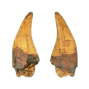 Set of 5 T Rex Tyrannosaurus Dinosaur Tooth Jurassic Age Replica Fossil