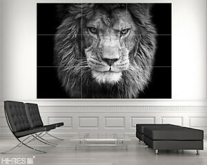 Image Is Loading Lion Poster Anim04 Bw Head Black Background Amazing