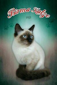 Birmania-Gato-Cat-Letrero-de-Metal-Arqueado-Tin-Sign-20-X-30cm-CC0356