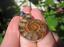 925-Plata-Africano-Madagascar-Amonita-Fossil-Colgante-Collar-Borgona-Color miniatura 3
