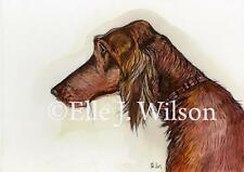Madra Rua -  Irish Setter Art Dog Print
