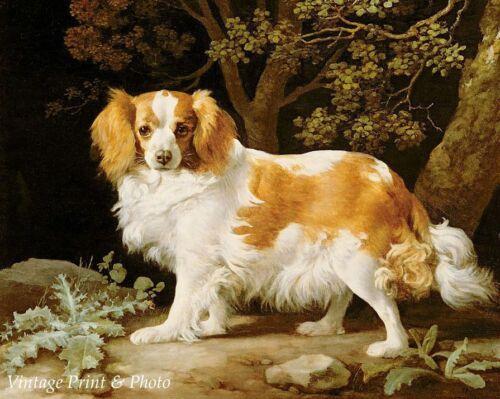 Royal Dog Breed Art King Charles Spaniel by George Stubbs 8x10 Print 410