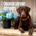 Chocolate Labrador Retrievers - 2017 Calendar 30 X 30cm