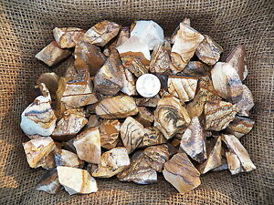 500-Carat-Lots-of-Picture-Jasper-Rough-Plus-a-FREE-Faceted-Gemstone
