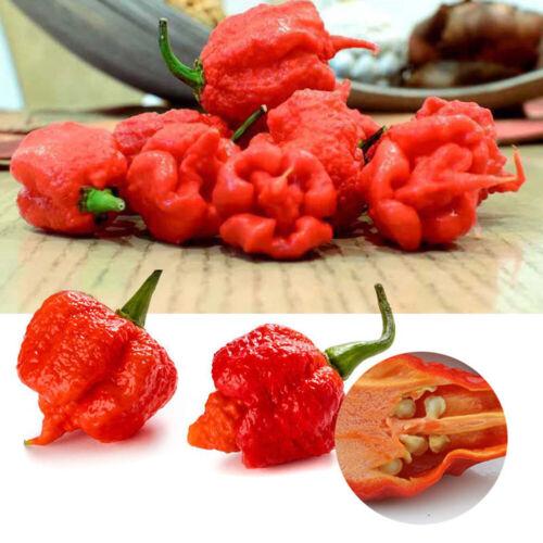 100Pcs Rare Carolina Reaper Chilli Pepper Vegetable Seeds Garden Decor  Cosy