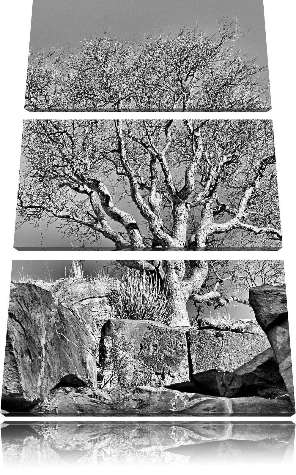 ALBERO solitario in montagna 3-Divisorio Tela Decorazione stampa d'arte d'arte d'arte 9e1f14