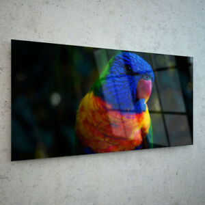 ANY-SIZE-Wall-Art-Glass-Print-Canvas-Picture-Photo-Tropical-Bird-Parakeet-p91220