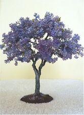 Splendido Blu Jacaranda semi-Giardino/BONSAI