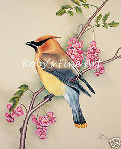 Cedar-Waxwing-Art-Print-5-034-x7-034-Giclee-Image-By-Realism-Artist-Roby-Baer-PSA