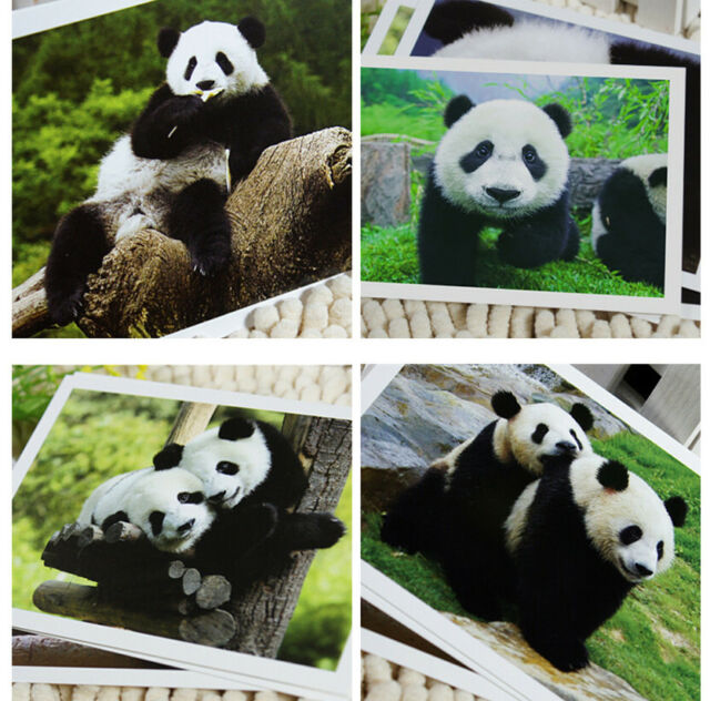 Lots Cute Giant Panda Postcards Post Cards Bulk 6PCS/SET