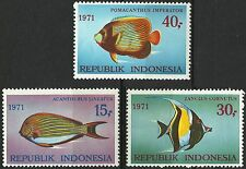 Indonesie Indonesia Faune Marine Life Poissons Acanthurus Fishes Fische ** 1971
