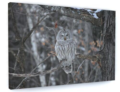 STUNNING NIGHT OWL BIRD CANVAS PICTURE PRINT WALL ART 6457