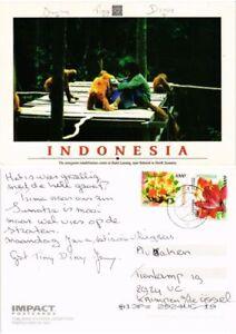 CPM AK Indonesia Sumatra-Bukit Lawang-Orang-utan rehabilitation (694865)