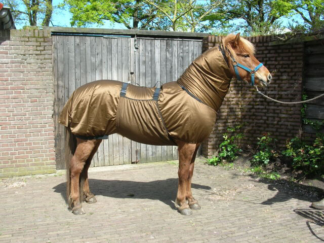 Sweet Itch by NEW fly rug by Itch Pagony (also fits Boett hood) 278aab