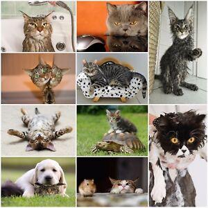 LUSTIGE-Katzen-10-er-Tierpostkarten-Set-Ansichtskarten-10-verschiedene-Motive
