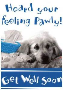 Heard Your Feeling Pawly Get Well Soon Really Cute Get Well Card Ebay