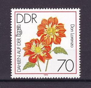 DDR 1979, 2440 Einzel1 - Neubrandenburg, Deutschland - DDR 1979, 2440 Einzel1 - Neubrandenburg, Deutschland